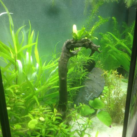 Links1 - (Fische, Aquarium, Skalare)