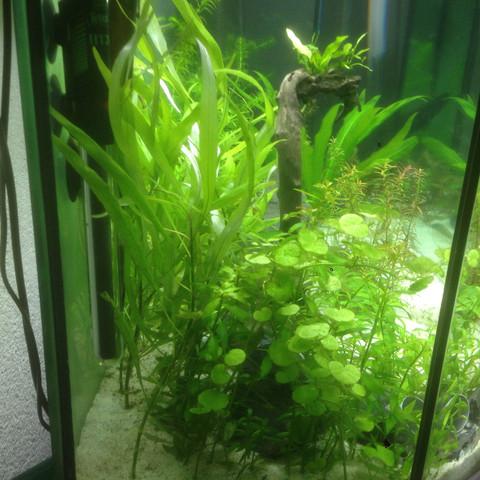 Links2 - (Fische, Aquarium, Skalare)