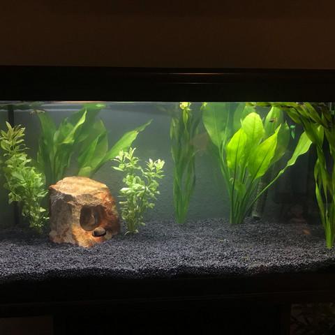 Gesamtansicht  - (Pflanzen, Aquarium, schneiden)