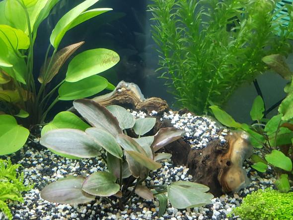 weisser Flaum2 - (Natur, Aquarium, Wurzel)