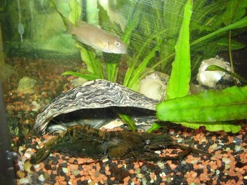 mein! Mr. Krabs...im Aquarium... - (Kroatien, Giftige Tiere, Urlaub mit Kindern)