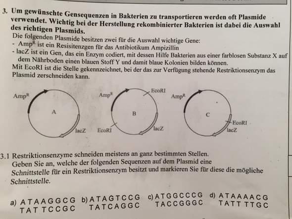 Aufgabe bei Gentechnik (Biologie)?