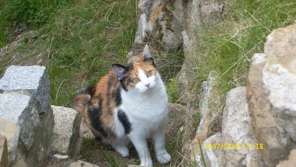 Katzenauge - (Tiere, Augen, Katze)