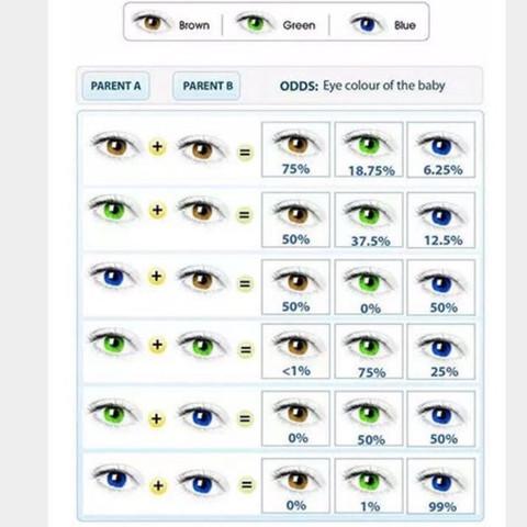 Vererbung augen grün braune Welche Augenfarbe