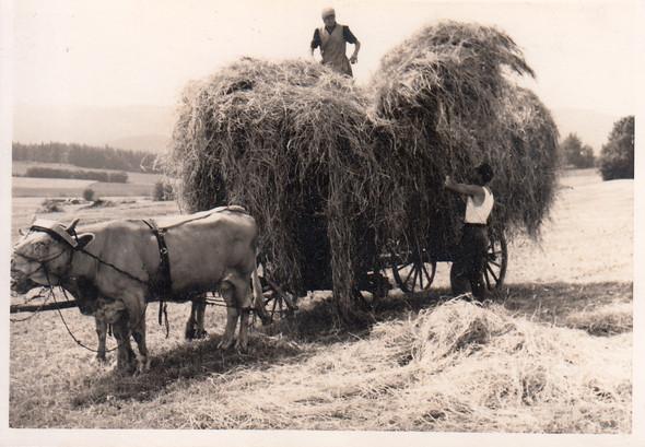 Heuernte - (Geschichte, Landleben, agrargesellschaft)