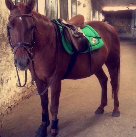 Das ist meine Stute :) - (Pferde, reiten, Ausdauer)