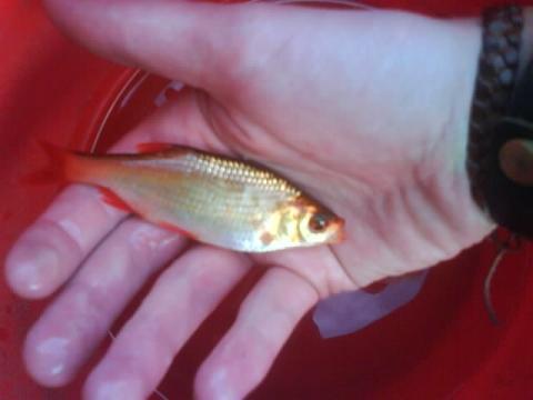 Au ergew hnliche fische im gartenteich teich for Fische im teich im winter