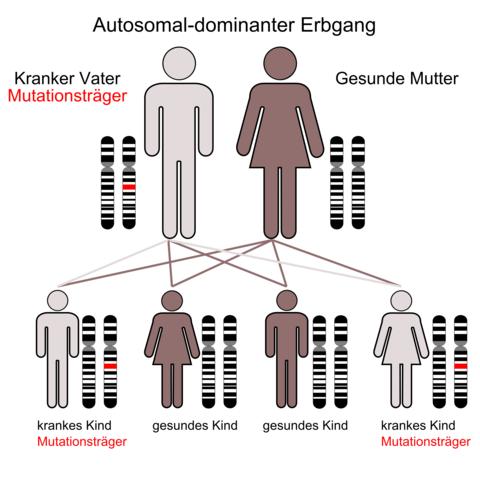 Das Bild zu autosmal dominant - (Schule, Biologie, Genetik)