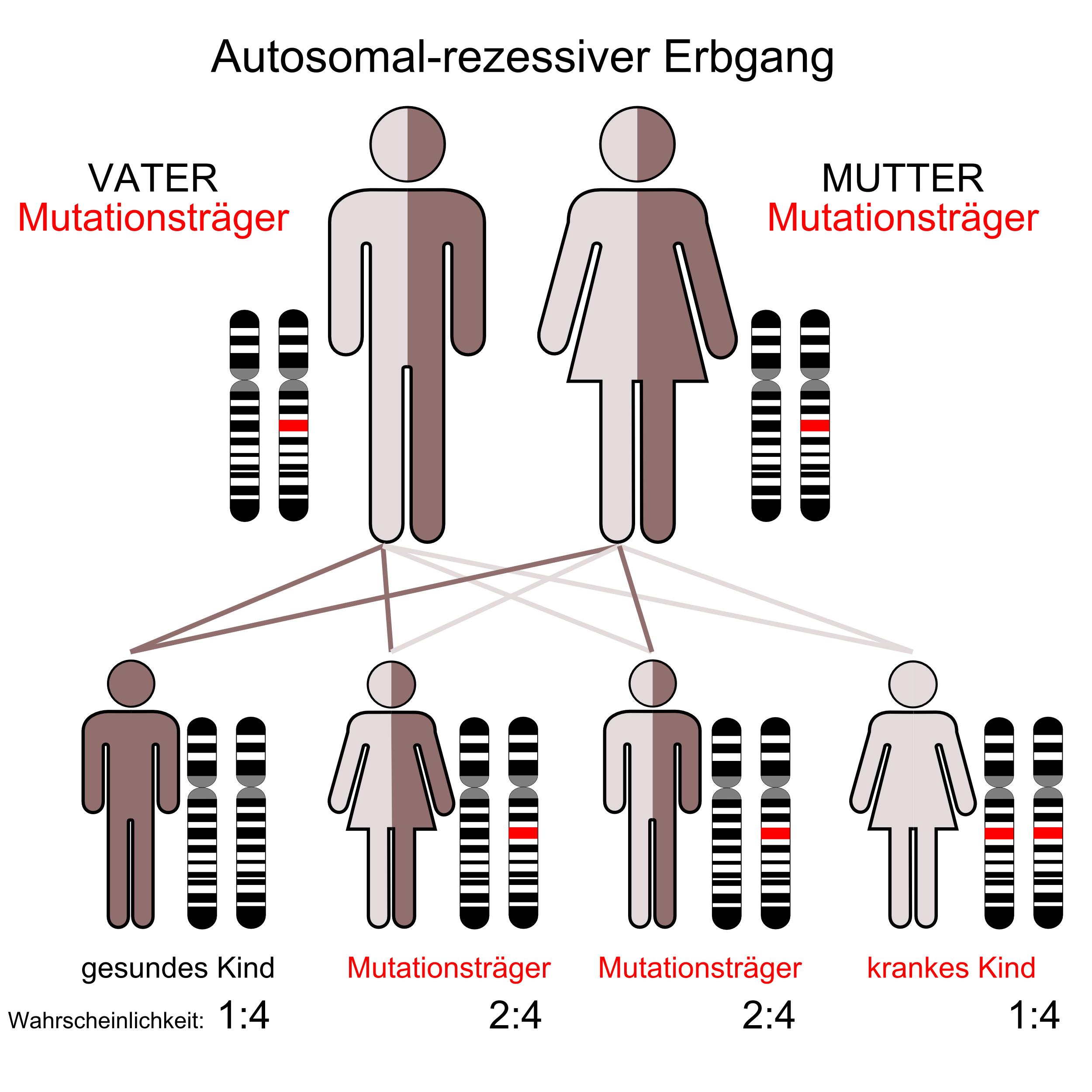 Autosomal Rezessiv und Dominant (Schule, Biologie, Genetik)