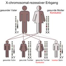 Rezessiv - (Biologie, Genetik, Vererbung)