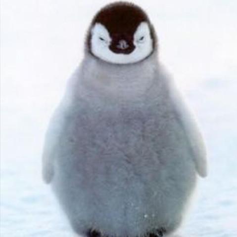 Eingentlich weiss ja jeder wie ein Pinguin aussieht, aber trotzdem  - (Schule, Tiere, Plakat)
