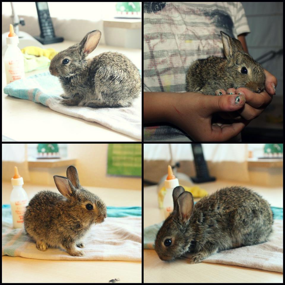 baby kaninchen gefunden nachts f ttern oder nicht tiere. Black Bedroom Furniture Sets. Home Design Ideas