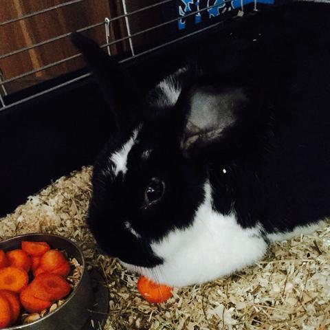 Und das ist die 4 1/2 Jahre alte Lucy (weiblich) - (Haustiere, Kaninchen, Baby Kaninchen)