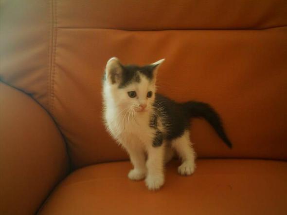 Baby katze gefunden ...was tun?