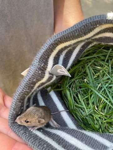 Baby Maus gefunden was tun?