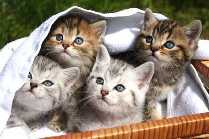 ^^ - (Freizeit, Tiere, babykatze)