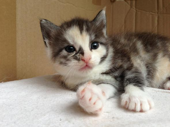 Bagiera Als Weiblicher Katzenname Katze Name Katzennamen