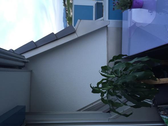 Balkon Und Katze Freizeit Sicherung Katzennetz