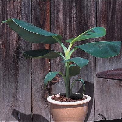 - (Pflanzen, Mineralwasser, Palme)