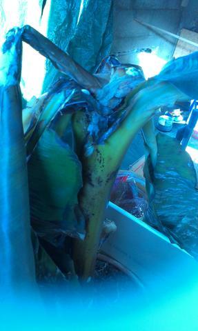blatt stark mit schimmel und weich ,braun - (Garten, Banane)