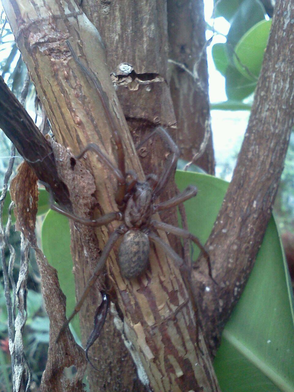 Giftige Spinne