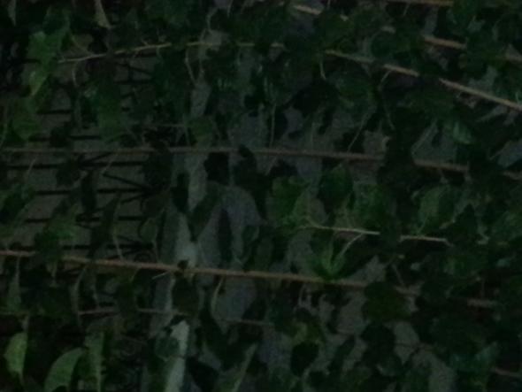Baum - (Baum, Pflanzenbestimmung, Beeren)