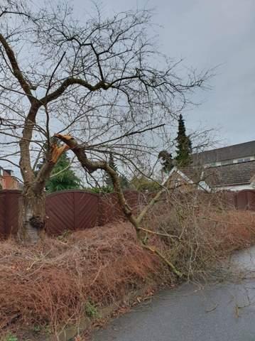 Baum zu 50% beschädigt bei fehlenden Ast?