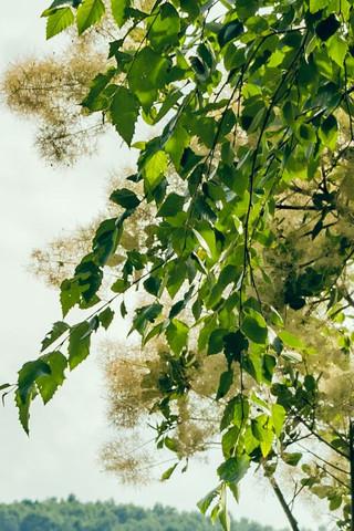 Baum2 - (Natur, Baum, Bestimmung)