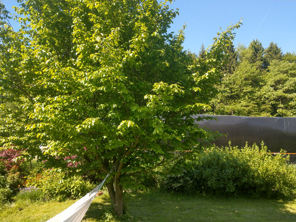 Baumbestimmung. Was ist das für ein Baum?