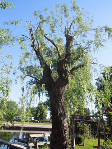 Weide2 - (Landschaft, Baumschnitt, Baumpflege)