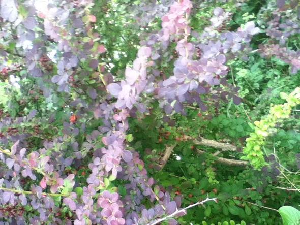 Blätter   (Pflanzen, Baum, Blatt)