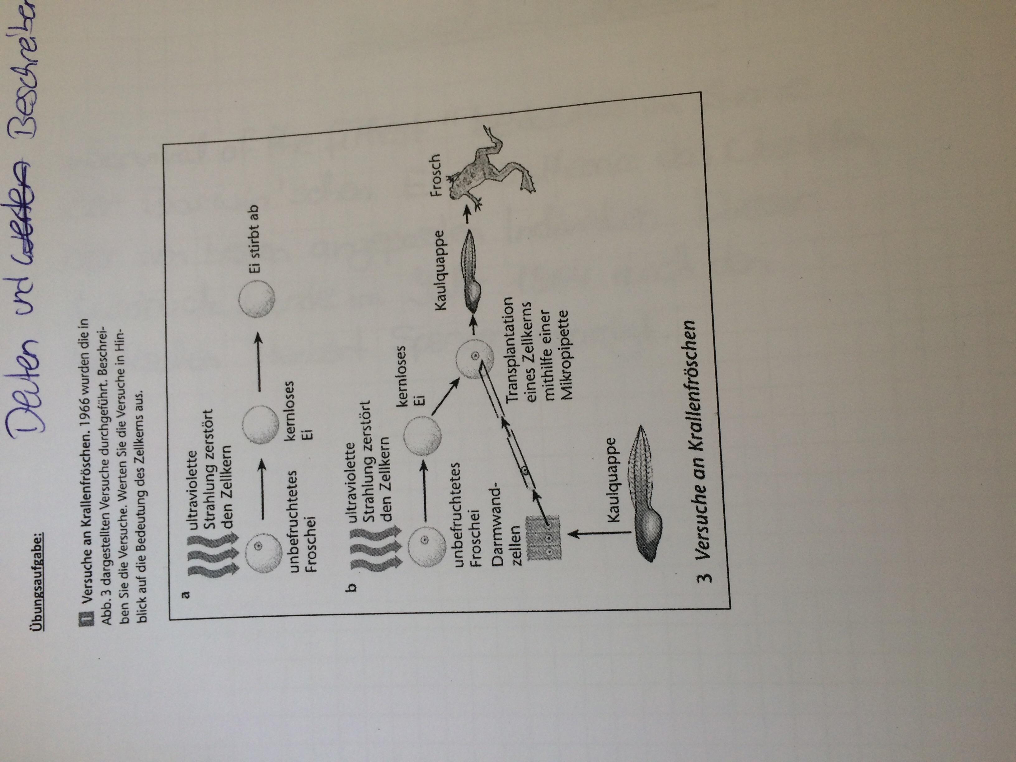 Bedeutung des Zellkerns (Transferfrage)? (Biologie)