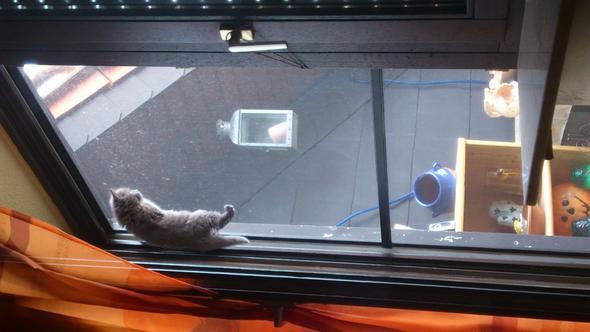 Balkontür mit Fliegengitter,sie will auf die Strasse gucken können - (Tiere, Hund, Erziehung)