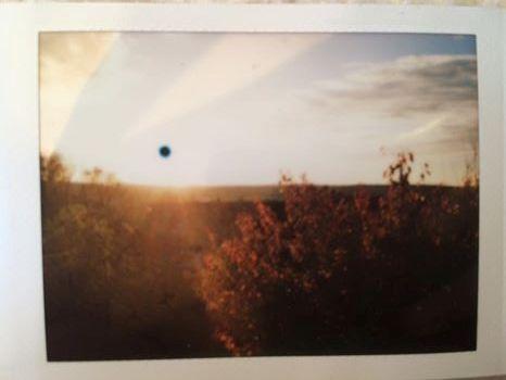 Bei meinem polaroidbild erscheint bei der sonne ein for Was tun bei fliegen in der blumenerde