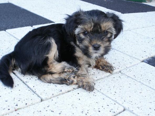 8 Wochen - (Hund, Farbe, Hündin)