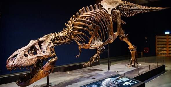 Berufe mit ausgestorbenen Tieren (Dinosaurier, Titanoboa etc.)?