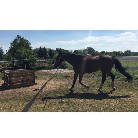 Vorher 1 - (Gesundheit und Medizin, Pferde, Muskeln)