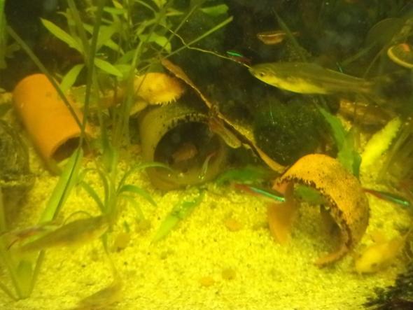 Welche Aquariumbarbe - (Aquarium, Aquariumfisch)