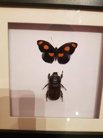 Bestimmung von Schmetterling?