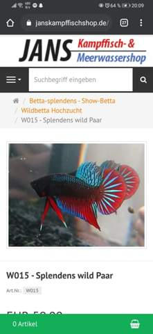Betta Paar?