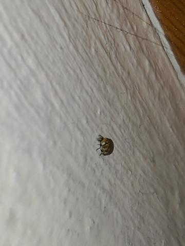 bettwanzen oder doch etwas anderes insekten bett zu hause. Black Bedroom Furniture Sets. Home Design Ideas