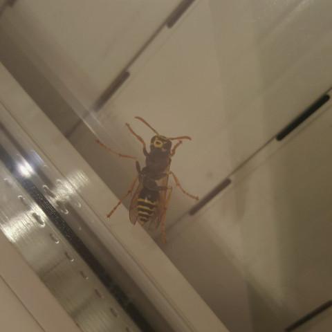 Biene - (Tiere, Wohnung, schlafen)