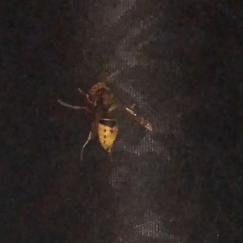 Bienenkönigin Riesen Hummel was war das?