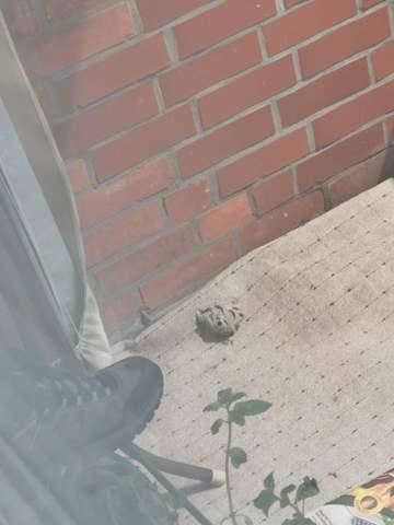 Bienennest aufm Balkon wer bezahlt?