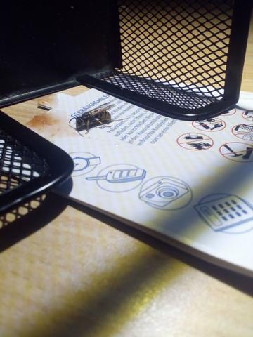 wespen ratgeber forum. Black Bedroom Furniture Sets. Home Design Ideas