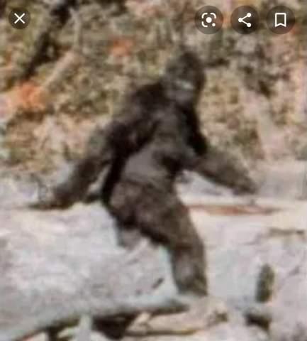 Bigfoot im video oder was anderes?