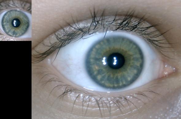 Auge - (grün, Augenfarbe)