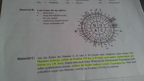2. Teil der Aufgaben - (Biologie, Klausur, Genetik)