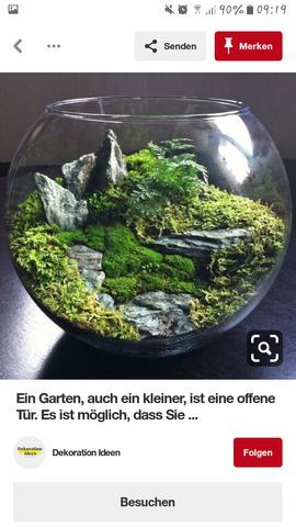 Bio bowl terrarium?