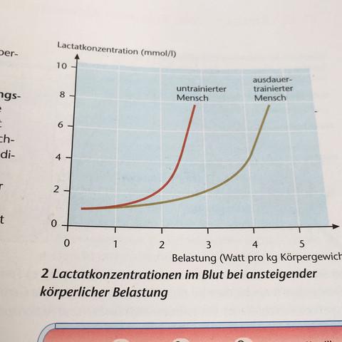 Lactatkonzentration - (Schule, Fitness, Biologie)